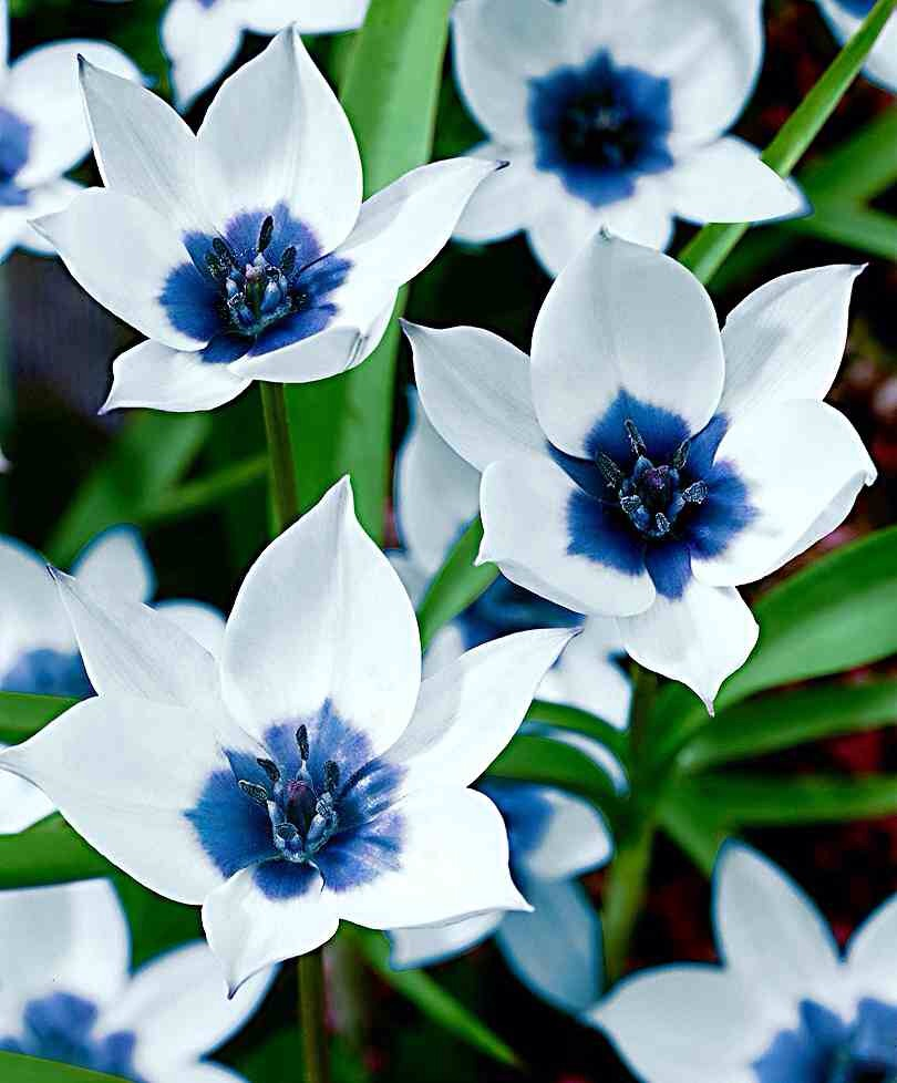 Blue and white flowers names gallery flower decoration ideas outdoor garden different flowers and their names mightylinksfo